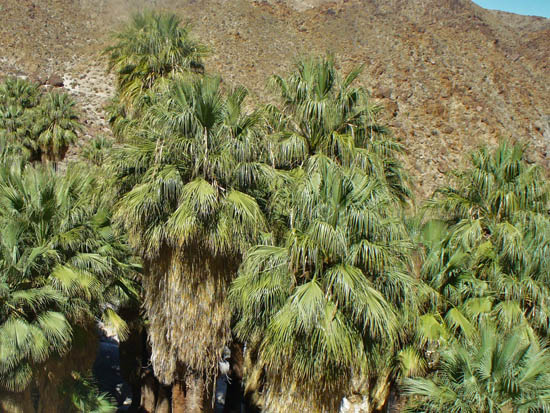 Forty Nine Palms Oasis